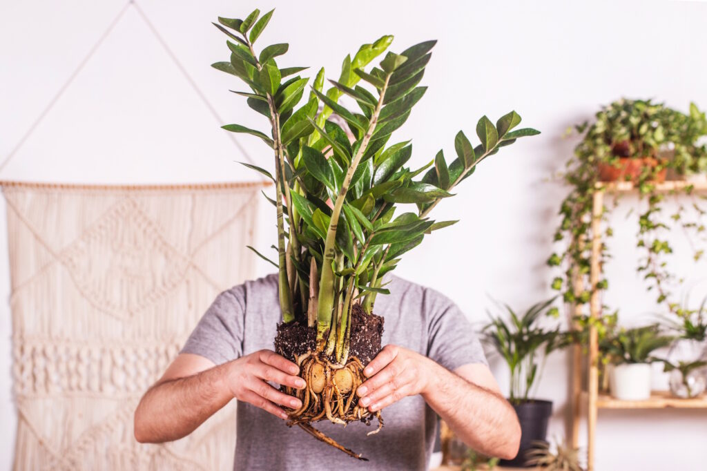 The Best Plant Care Tips According to Plant Kween