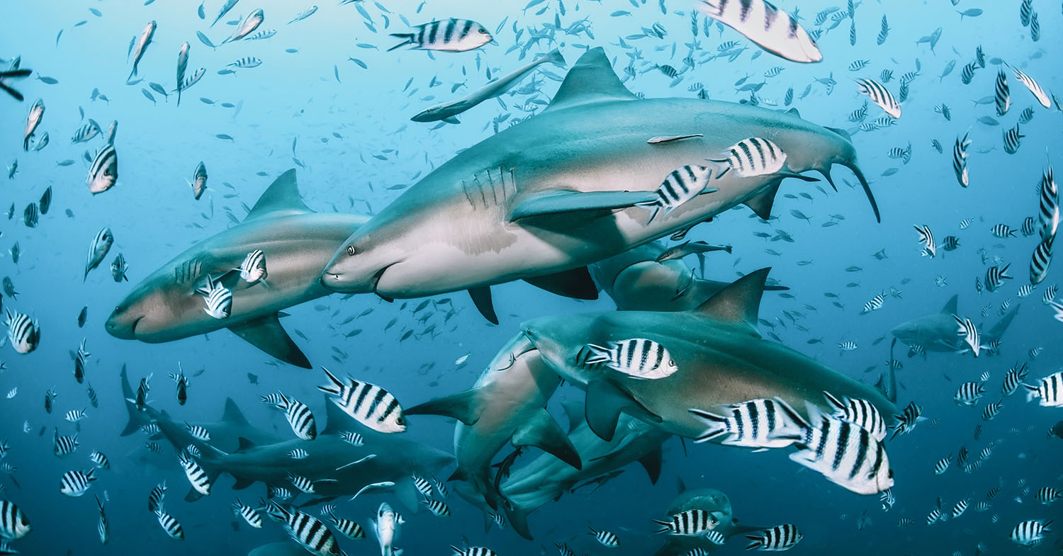 Why We Need Sharks, Maybe Even More Than Trees