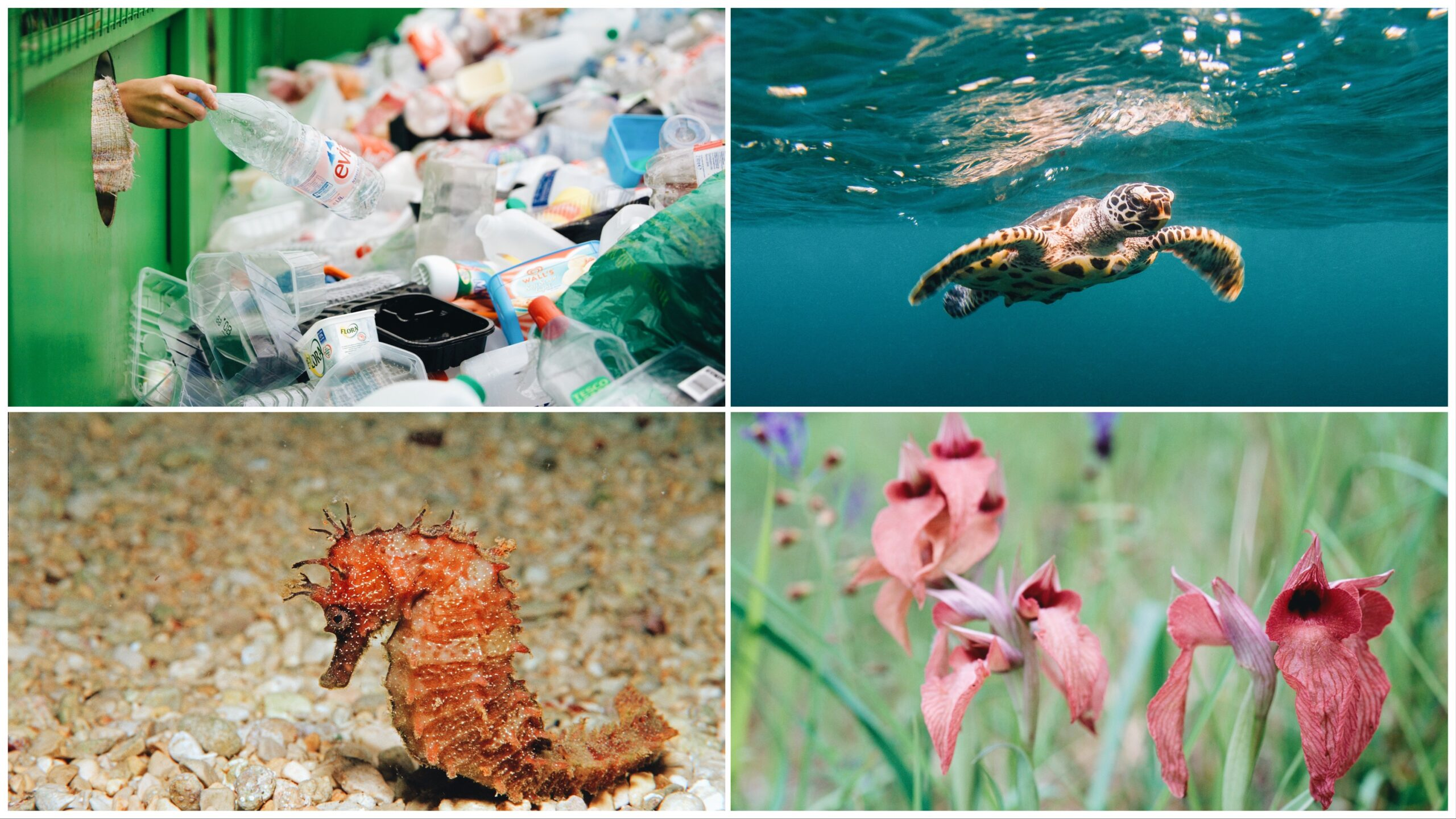 Four-way-split image featuring recycling, a sea turtle, a seahorse, and orchids (L-R clockwise).