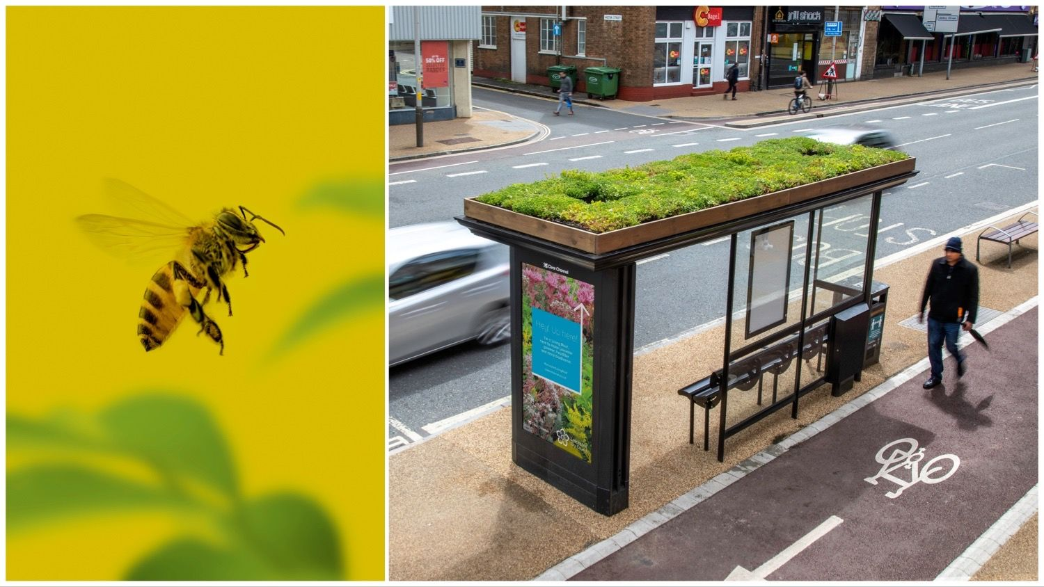 A bee against a yellow background split with a picture of a bus stop with a grass roof.