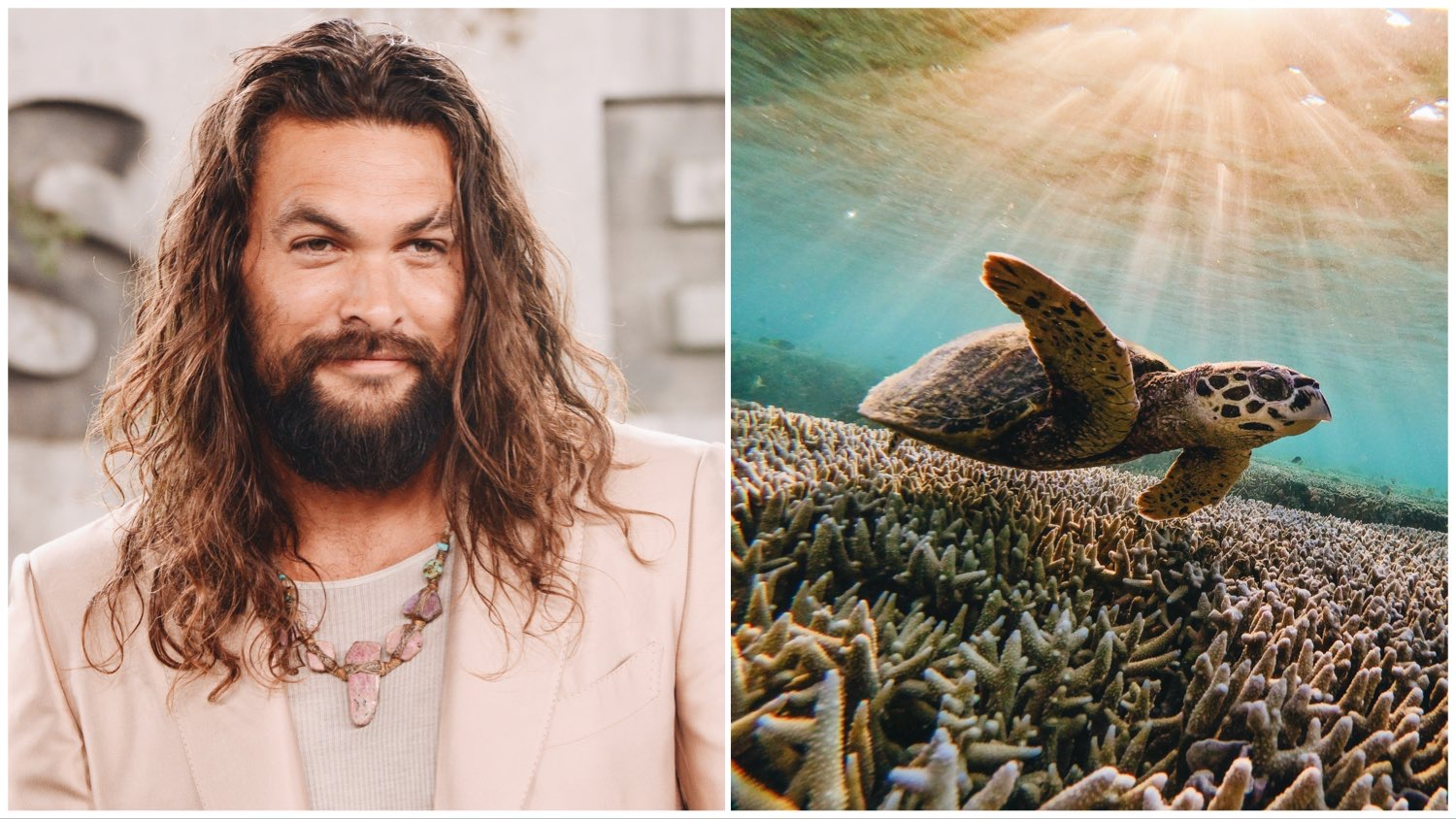Split image featuring environmentalist and actor Jason Momoa (left) and a sea turtle swimming above coral (right).