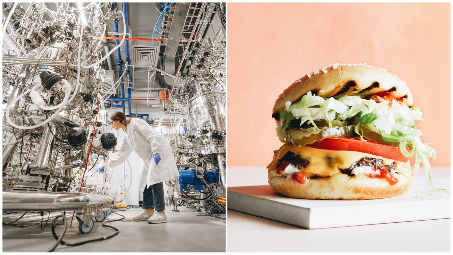 Split of a lab environment (left) and a Future Meat cultured burger (right).
