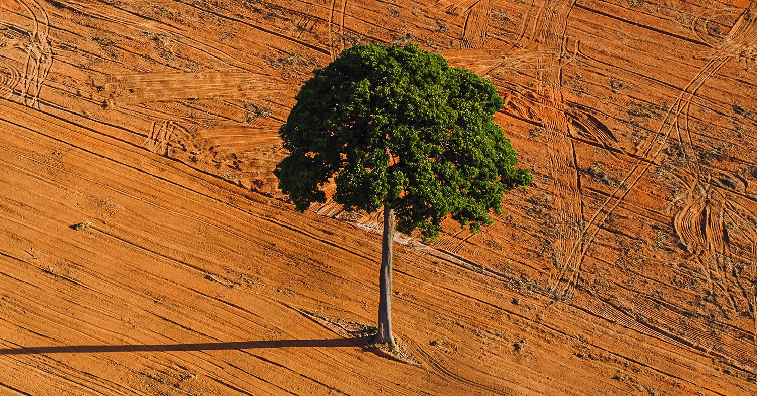 Photo of a tree in a deforested area