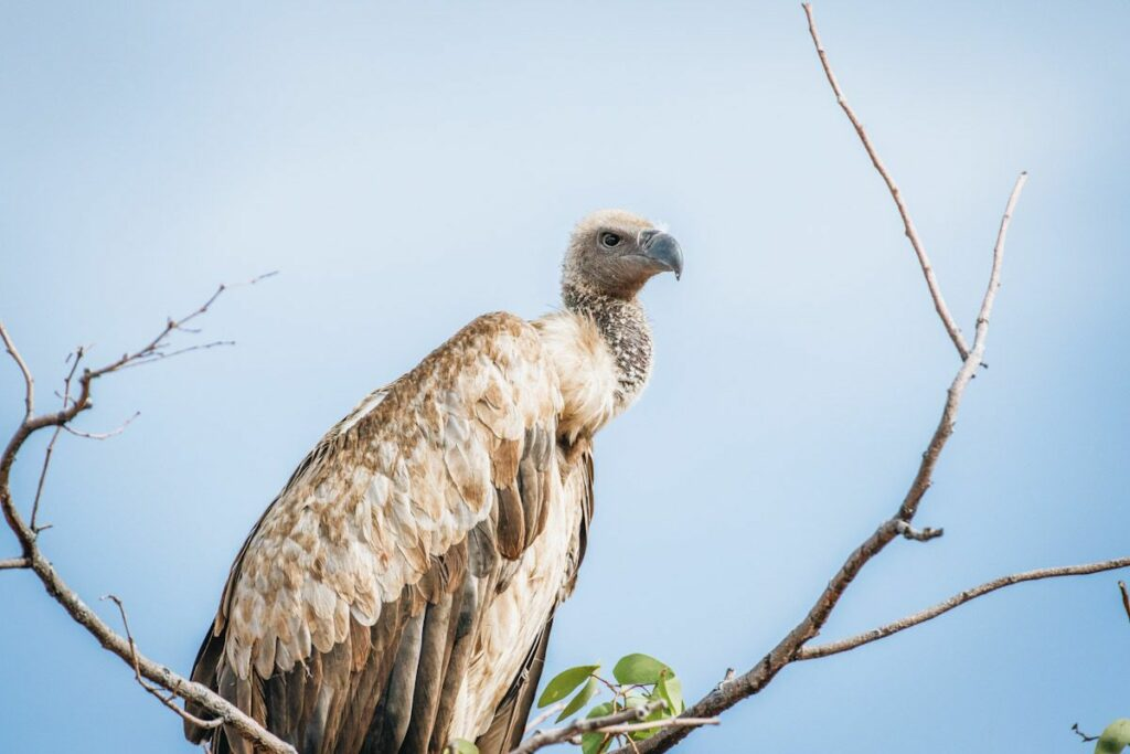 A vulture perched on a branch