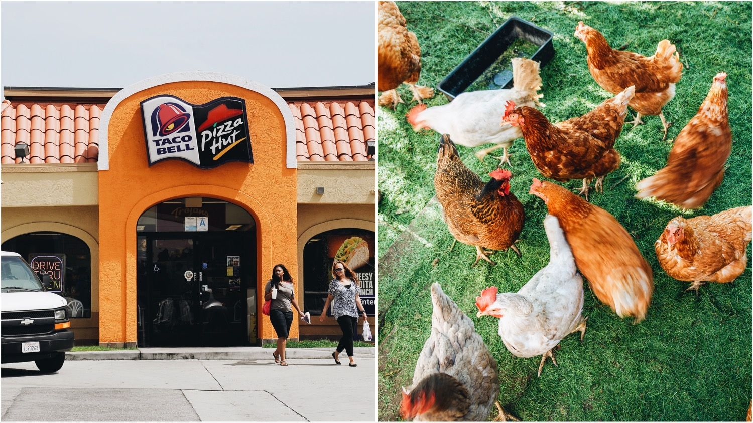 A combination Pizza Hut and Taco Bell restaurant alongside an image of cage-free hens
