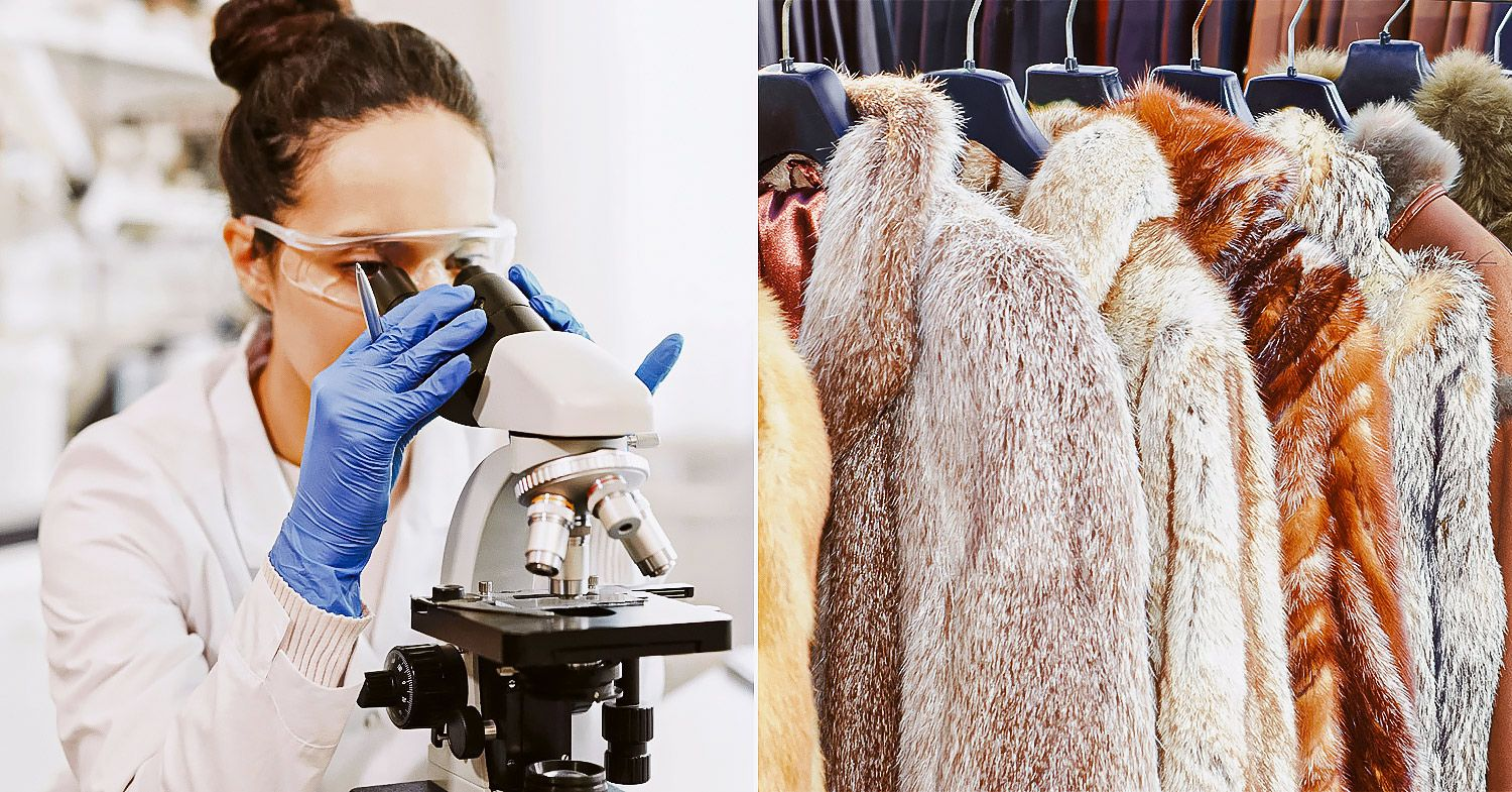 Photos of a scientist looking into a microscope and fur coats