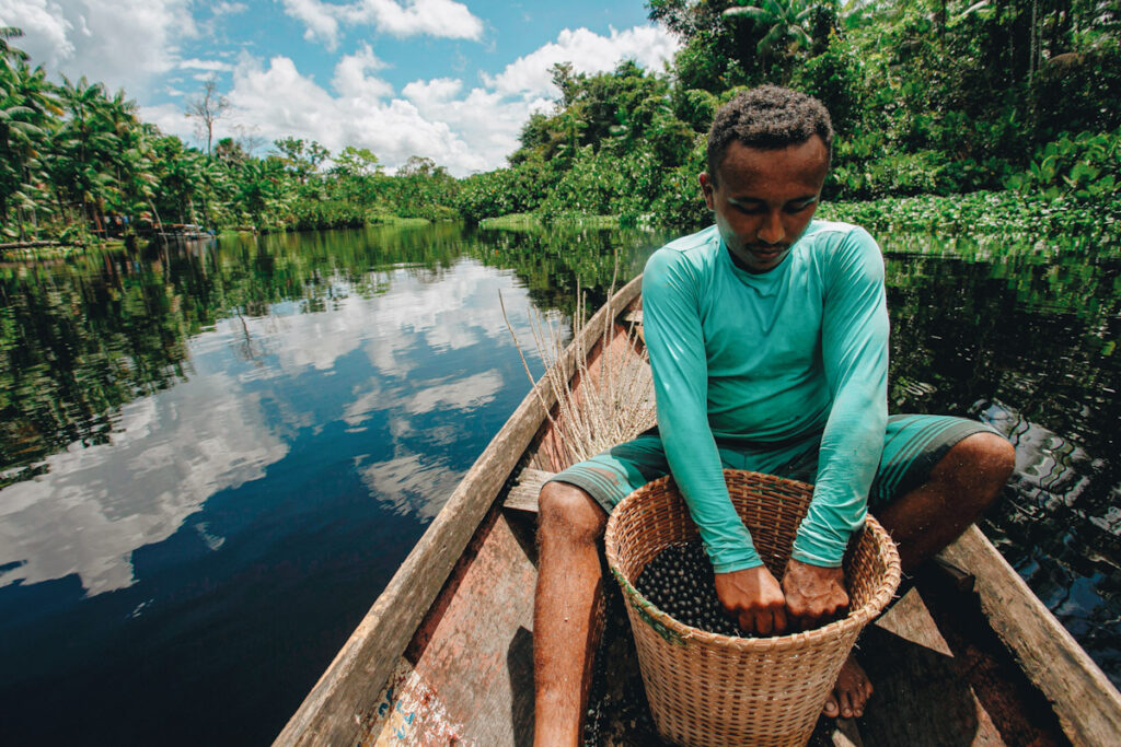 Photo shows Sao Jose-based acai harvester Jesus Silva with a bucket full of the berries on his boat.